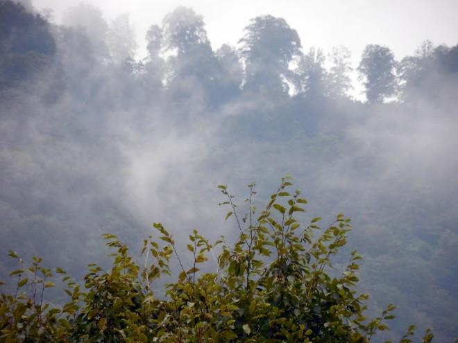 georgia-fog-3159