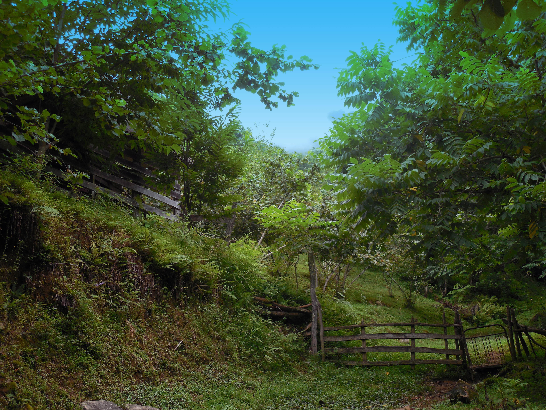 georgia-mitrala-green-w-blue-sky-3161